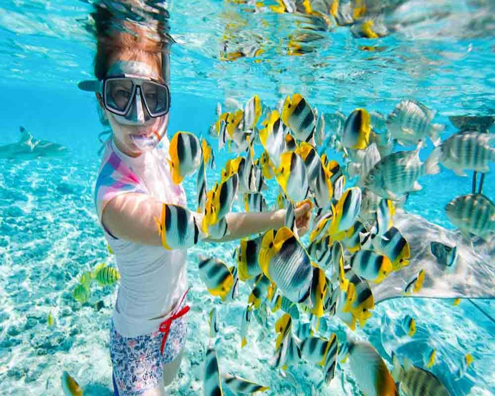 Color fish -Snorkeling Giftun Island