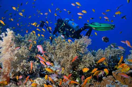 Sharm Tour Package with Nile Cruise (13 Days)