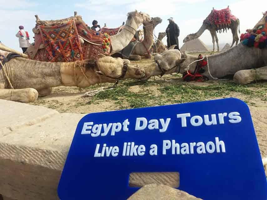 Camel in Sakkara