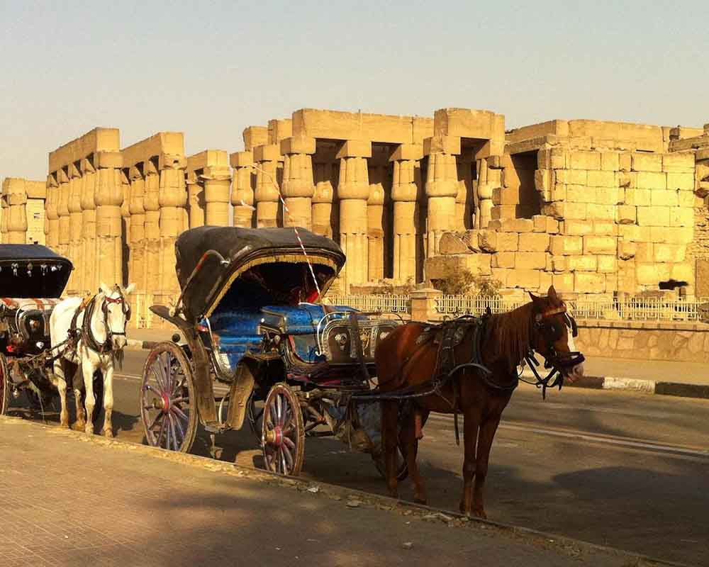 Luxor Horse Carriage Trip