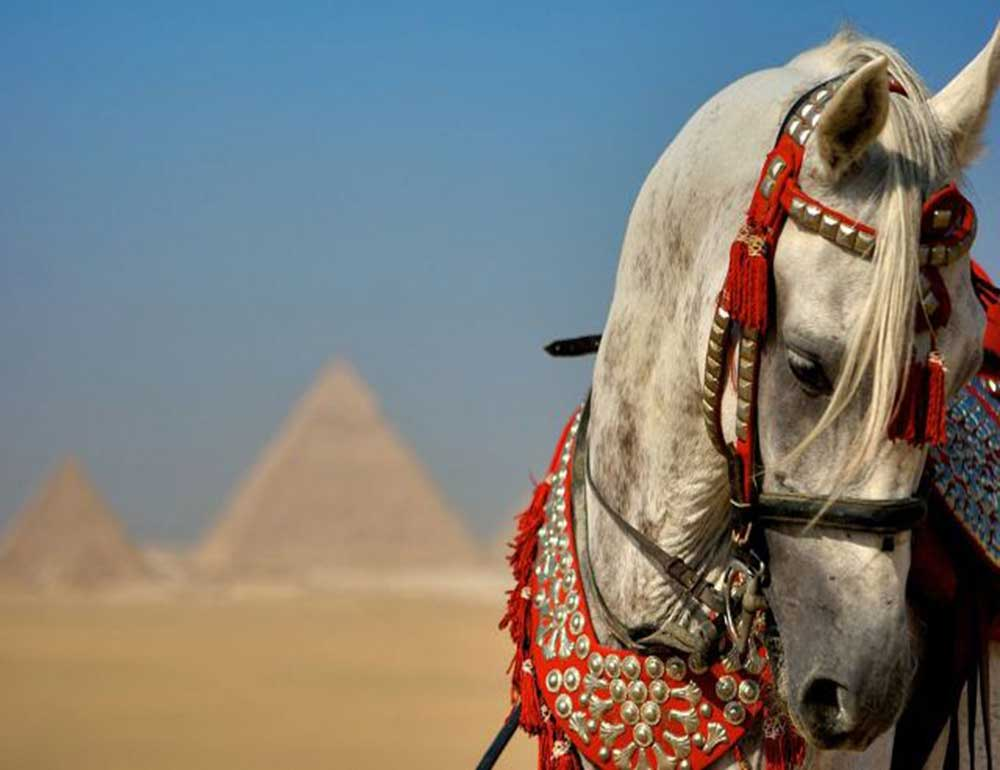 Cairo 4 day package