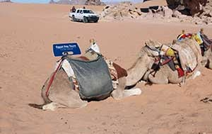 egypt camel safari excursion